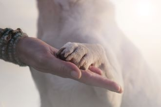 Mensch_Hund_Tier_Kommunikation