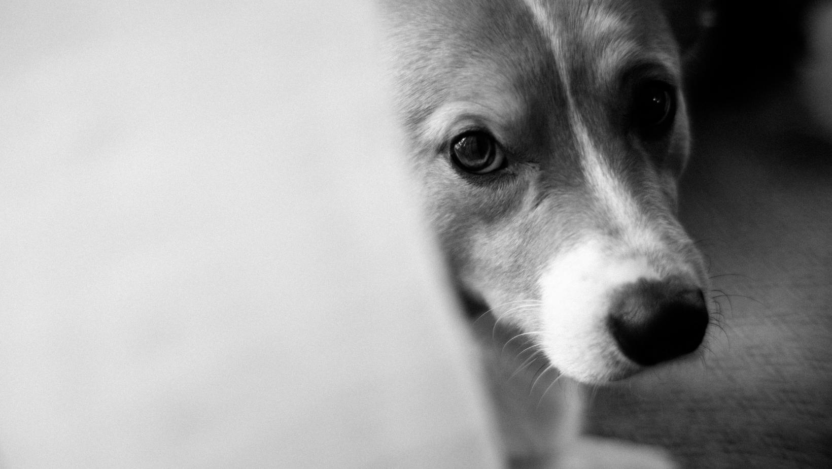 Hund schwarz-weiss